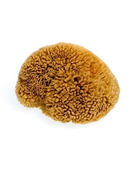 Prírodná morská tráva na telo stredná - hnedá image